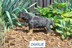 CHARLIE 2 09.08