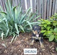CHEJRON 1 09.08