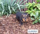 CLIFFORD 1 09.08